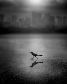 Urban Flyer © Dennis Ramos