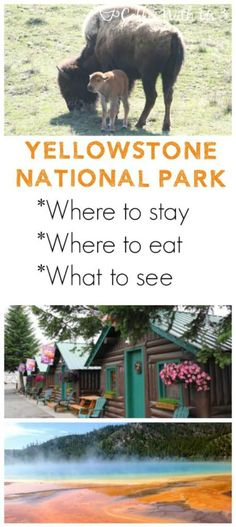 Where to stay in Yellowstone, Where to eat in Yellowstone, What to see in Yellowstone