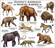 Extinct Mammals of North America...ROGER D HALL.....a scientific illustrator specializing in wildlife and architectural subjects....predominantly self-taught....works with pen and ink....artwork has appeared in numerous media (newspaper, books, website, etc)....a Minnesota native now based in Oakland, California....associated with several zoos and aquariums in the US