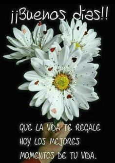 Good Day Quotes : QUOTATION – Image : Quotes Of the day – Description Un buen consejo Sharing is Caring – Don't forget to share this quote ! Good Day Quotes, Wish Quotes, Good Morning Quotes, Quote Of The Day, Good Morning Good Night, Morning Wish, Morning Messages, Happy Summer, Spanish Quotes