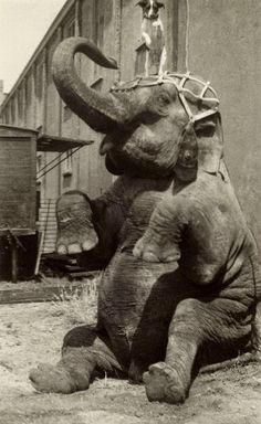 vintage everyday: Interesting Old Pictures of Circus in Netherlands from between 1910s to 1920s