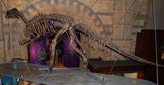 Mounted skeleton ofMantellisaurus atherfieldensis,Natural History Museum, London