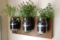 Mason jar herb garden.  Nicer than average mounting for an upcycled jar project.  #garden #upcycle #diy