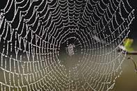spider web - Google Search