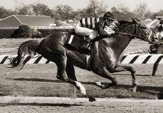 Majestic Prince- 1969 Winner of the Kentucky Derby and the Preakness Kentucky Derby, Preakness Stakes, Preakness Winner, Derby Horse, American Pharoah, Derby Winners, Sport Of Kings, Thoroughbred Horse, Racehorse