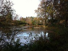 Linthwaite House Hotel pond - reminiscent of Henry David Thoreau's Walden Pond