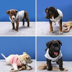 4 Ways To Recycle Clothing Into Dog Sweaters, Diy Abschnitt, ropa para perros 4 Ways To Recycle Clothing Into Dog Sweaters, Dog Coat Pattern Sewing, Dog Sweater Pattern, Crochet Dog Sweater, Large Dog Coats, Coats For Dogs, Small Dog Sweaters, Puppy Sweaters, Pet Dogs, Pets