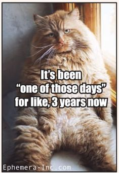 Funny Dogs And Cats With Captions Lol Humor 44 Super Ideas Funny Captions, Funny Animal Memes, Cute Funny Animals, Funny Dogs, Cute Cats, Funny Memes, Adorable Kittens, Hilarious, Cats Funny Sayings