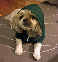 animal hoodies 17 These animal are staying warm (18 photos)