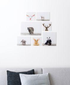 Hertenkop, geitenkop, lammetje, wasbeer, baby olifantje, konijn en baby panda aan de muur in de woonkamer. Leuke vorma van wanddecoratie in verschillende formaten en op vele materialen verkrijgbaar.