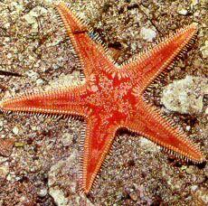 Starfish   Colour & Light   Pinterest   Starfish, Kid and For kids