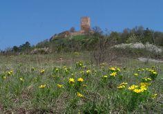 Adonisröschen mit Burg