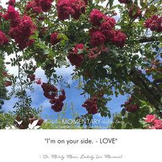 """I'm on your side. - LOVE"" - Dr. Melody Moore Embody Love Movement. . #positivemomentarydistraction #thriveoutsidehealinside #restorative #garden #comfortzone #sanctuary #garden #quote #mondaymotivation #prospectandrefuge #garden #design #mentalhealthbreak #selfempathy #safeplace #healinggardenhappyplace #whyyouneedagardencomfortzone #mindfulness #naturenurtures #climbingroses #lookup #blooms #happy #flower #LOVE #microrestorativemoment @butchartgardens"
