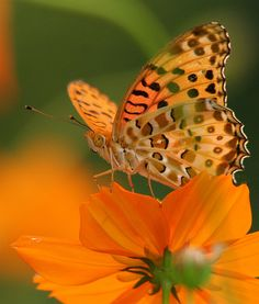 a garden filled with colorful flowers is a feast for creatures that fly, crawl, slide and walk