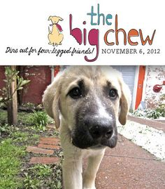 On Tuesday, November 6, 2012 The Big Chew is scheduled, which means that if you go to any one of these restaurants to grab a bite to eat, a percentage of your meal will go towards the SPCA. #Buffalo