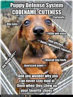 Puppy Defense System CODENAME: CUTENESS