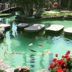 Beautiful Fish, Beautiful Gardens, Animals Beautiful, Fish Pond Gardens, Koi Fish Pond, Planted Aquarium, Aquarium Fish, Underwater Animals, Aquarium Design