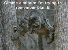 I ❤ kitties . . . Gimme a minute, I'm trying to remember Plan B