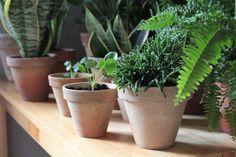 Wabi-sabi plants czyli ceramiczne doniczki. #wabisabiplants #wabisabi #pottery #ceramic #plants #rośliny