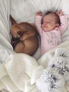 Omg that looks like my puppy! I had to do a double take #roxiegirl #chihuahua