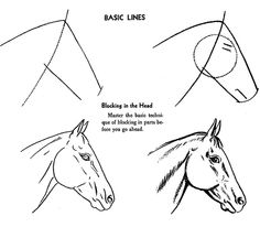 Drawing a horse head