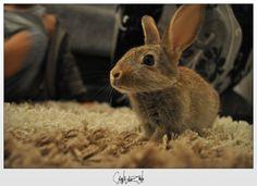 hey bunny bunny