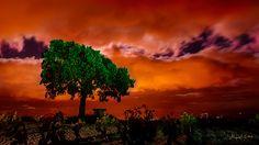 Nocturnas entreveradas_040
