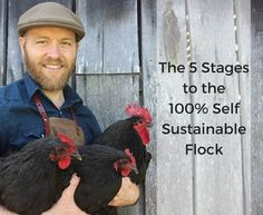 Great blog post about how to breed, maintain and raise chickens. methods of breeding, etc. very thorough.