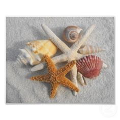 Mixed Sea Shells and Starfish