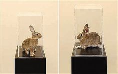 Taryn Simon researched the bloodline of rabbits
