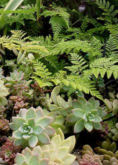 contrast of ferns and succulents