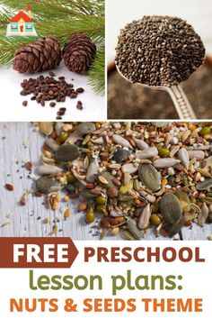 Free Nuts and Seeds Printable Lesson Plans for Preschool - Stay At Home Educator Homeschool Preschool Curriculum, Homeschool Worksheets, Preschool Lesson Plans, Homeschooling, Tiny Seed Activities, Preschool Learning Activities, Free Activities, Seeds Preschool, Fall Preschool
