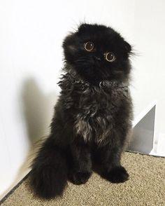 Gimo - кот с большими глазами кот, глаза, Gimo, длиннопост