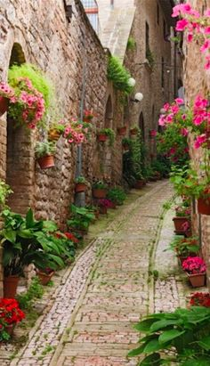 Alley of flowers in Umbria, Italy • photo: Jeremy Woodhouse on Getty Images