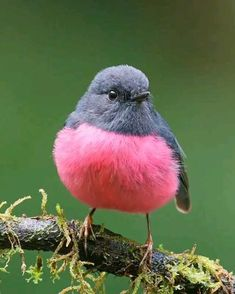 Funny Birds, Cute Birds, Pretty Birds, Cute Funny Animals, Beautiful Birds, Cute Baby Animals, Animals Beautiful, Vogel Gif, Birds Voice