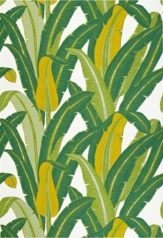 Tropical Isle Schumacher Wallcovering