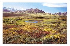La Tundra (Bioma Tundra)