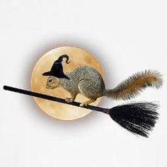 Witch squirrel