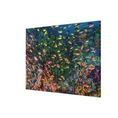 #fishing - #Schools of Fish Swim in Reef Canvas Print