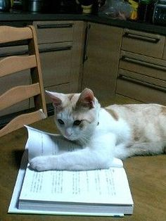 17 Cats That Take Their Bookmarking Job Seriously - World's largest collection of cat memes and other animals Funny Cats, Funny Animals, Cute Animals, Crazy Cat Lady, Crazy Cats, Cat Reading, Lots Of Cats, Beautiful Cats, Pretty Cats