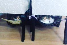 """19 curtidas, 2 comentários - Nakama Moda Pet (@nakamamodapet) no Instagram: """"Todos nós sabemos que nossos gatunos amam estar bem fresquinho no calor e quentinhos no inverno,…""""  Rede para gatos"""
