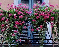 Valoisa parveke koristelu kukilla, 20 kukkivaa parvekekuviota Informations About Bright Balcony Decorating with Flowers, 20 Blooming Balcony Designs Pin You … Balcony Window, Small Balcony Decor, Balcony Railing, Small Gardens, Outdoor Gardens, Juliet Balcony, Balcony Flowers, Balkon Design, Kerala House Design