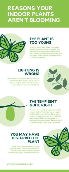 Reasons your indoor plants are not blooming. It's too young, lighting factors, temperature and other things. Check this out. Frugal Living Tips, Build Your Brand, Money Saving Tips, Homemaking, Debt, That Way, Personal Finance, Factors, Indoor Plants