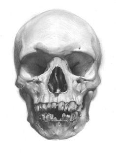 david jon kassan - visual artist - draw