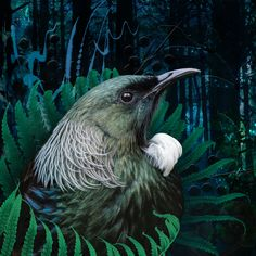 Bird Pictures, Pictures To Paint, Beautiful Artwork, Beautiful Birds, Tui Bird, New Zealand Art, Nz Art, Maori Art, Kiwiana