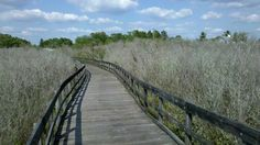 Oldsmar's signature events—Oktoberfest, Freedom Fest and Oldsmar Days—make it a fun place to visit, while its many parks steep visitors in natural beauty. Oldsmar Florida, Clearwater Florida, Cool Places To Visit, Railroad Tracks, Natural Beauty, Adventure, Park, Nature, Oktoberfest