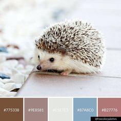 Hedgehog | Calm | Clean |Color Palette Inspiration. | Digital Art Palette And Brand Color Palette.