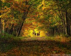 nature picture