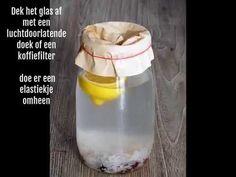 Waterkefir - Kefirplantje.eu Water Kefir, Kombucha, Beets, Green Beans, Spices, Health, Smoothies, Food, Smoothie