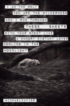 I'm the wolf you are the wilderness and I run through these sheets with your scent like a hungry distant lover howling in moonlight  #MichaelXavier
